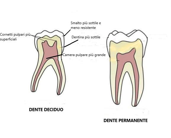 carie nei denti da latte: struttura denti